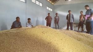 Pengawasan Benih di Gudang (kedelai) di Kabupaten Bima