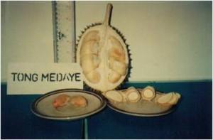 Tong Medaye