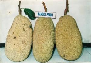 Nangka Prabu