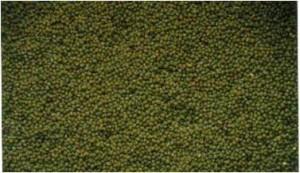 Kacang Hijau Sampeong